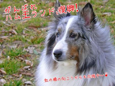 復興応援ベス.jpg